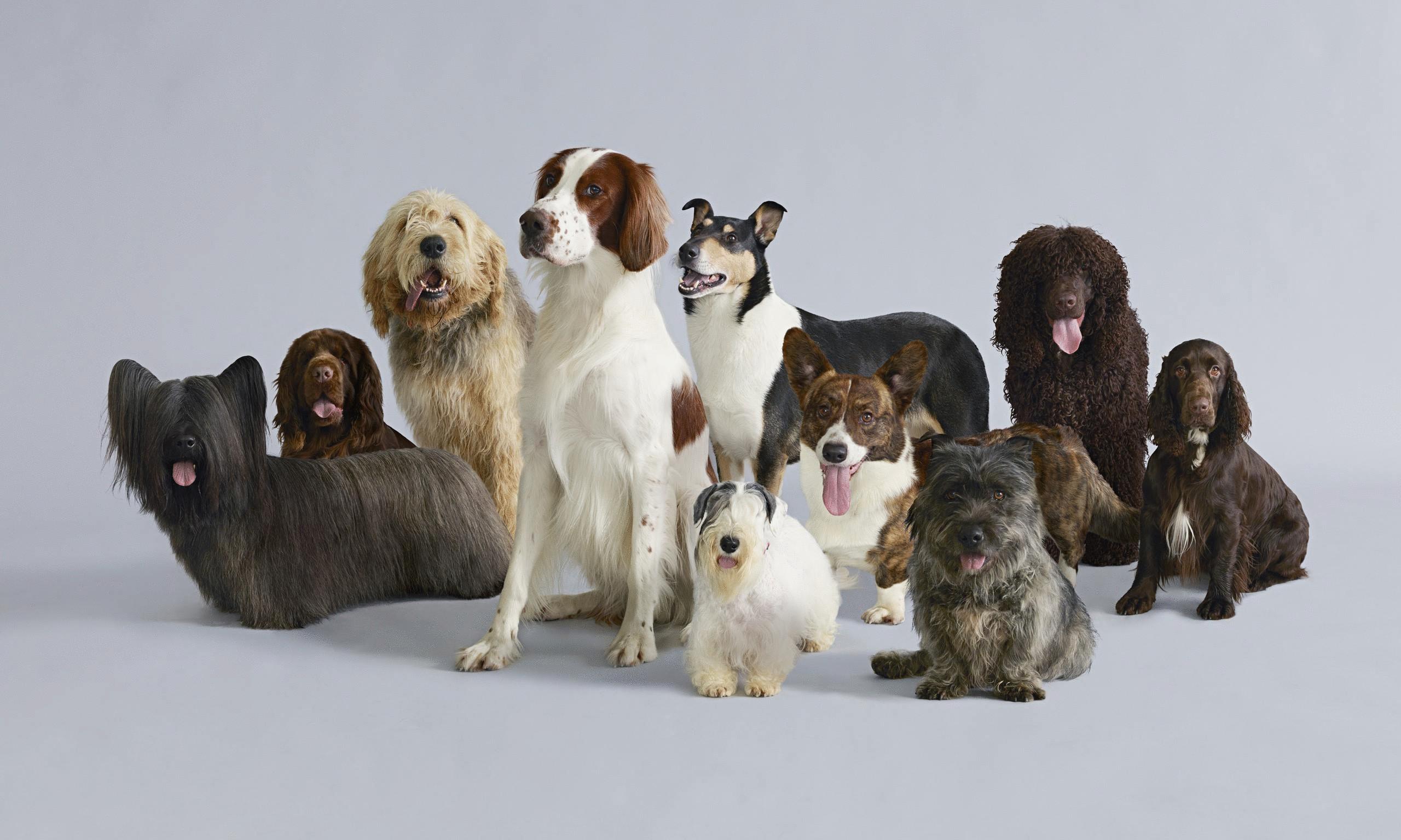 выбор собак с картинками значение какую