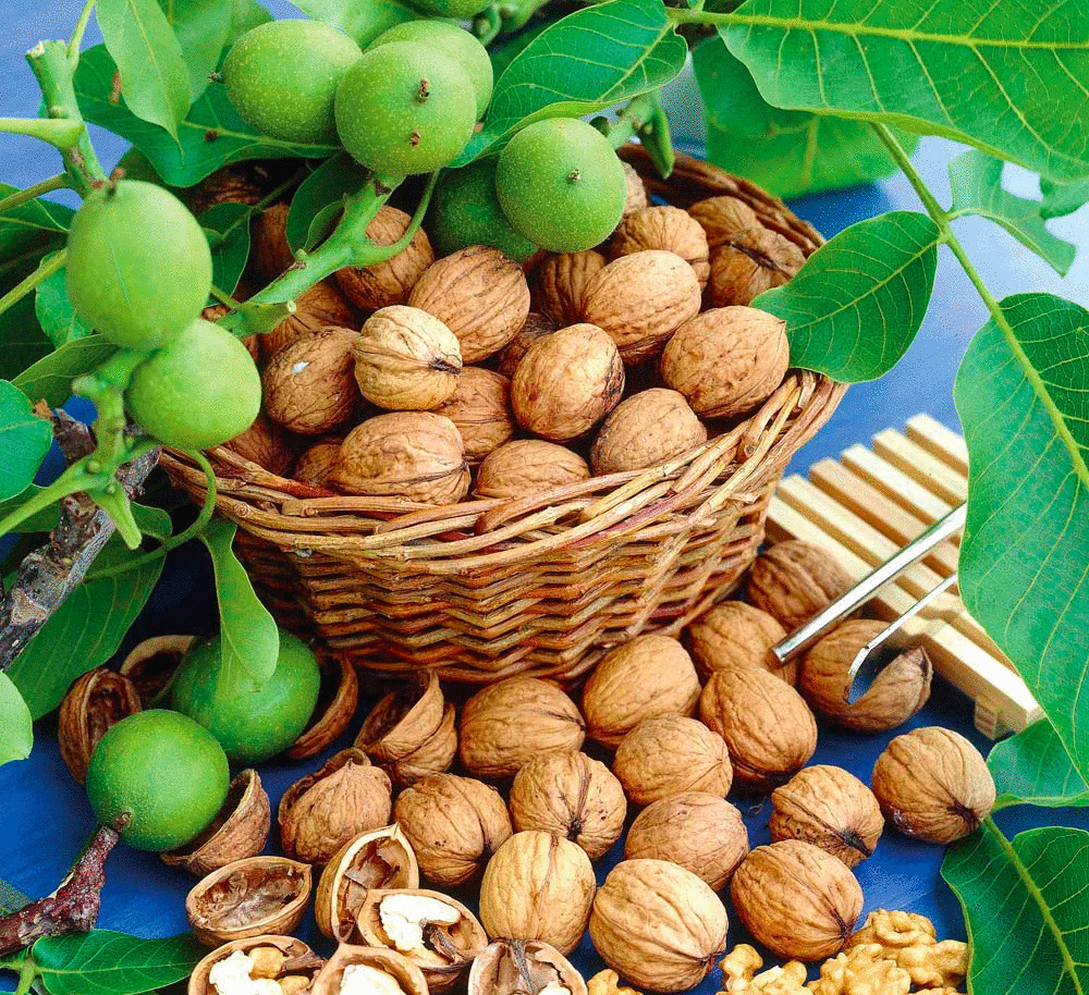 Грецкие орехи для желудка и кишечника
