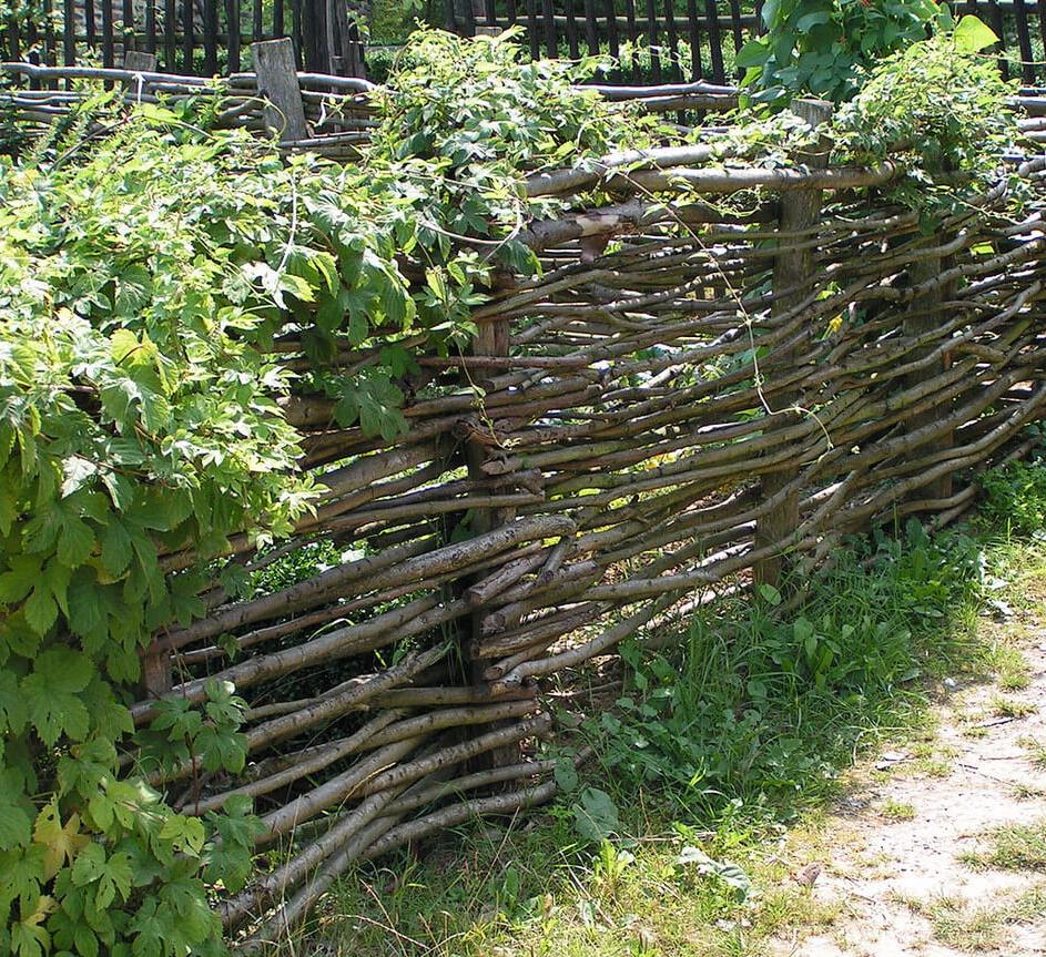 плетеный забор из веток своими руками фото этой