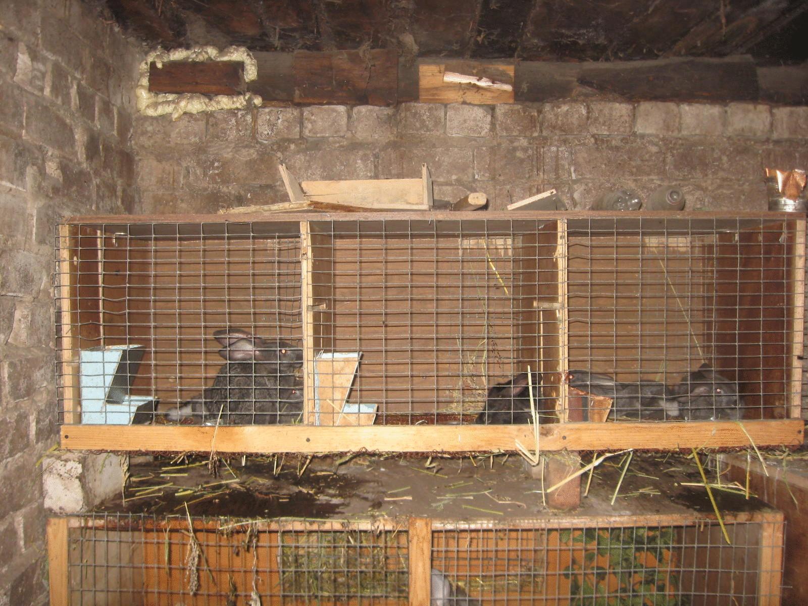 Клетки для кроликов в сарае