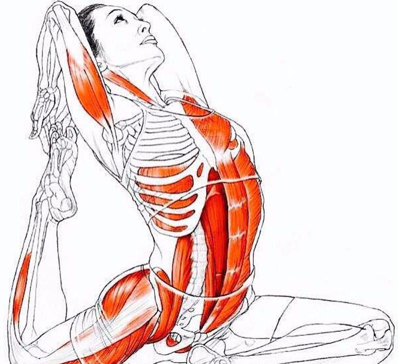 Упражнение на спины мышцы женщине картинки