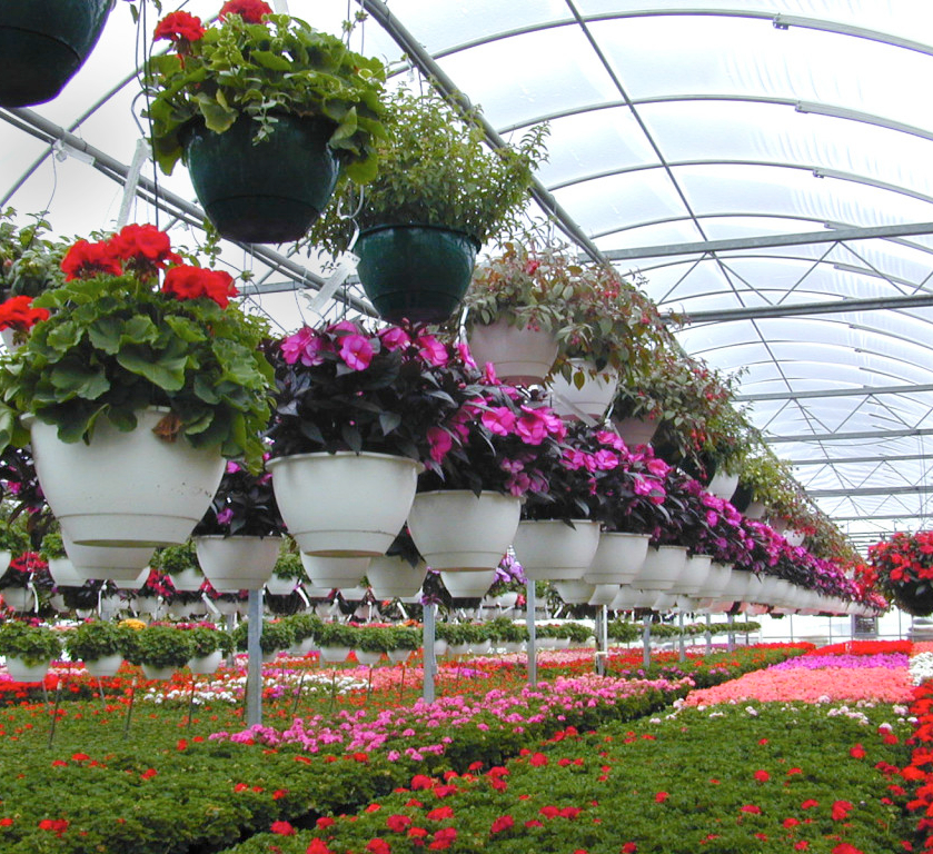 Букетов курьером, сайт цветоводов любителей