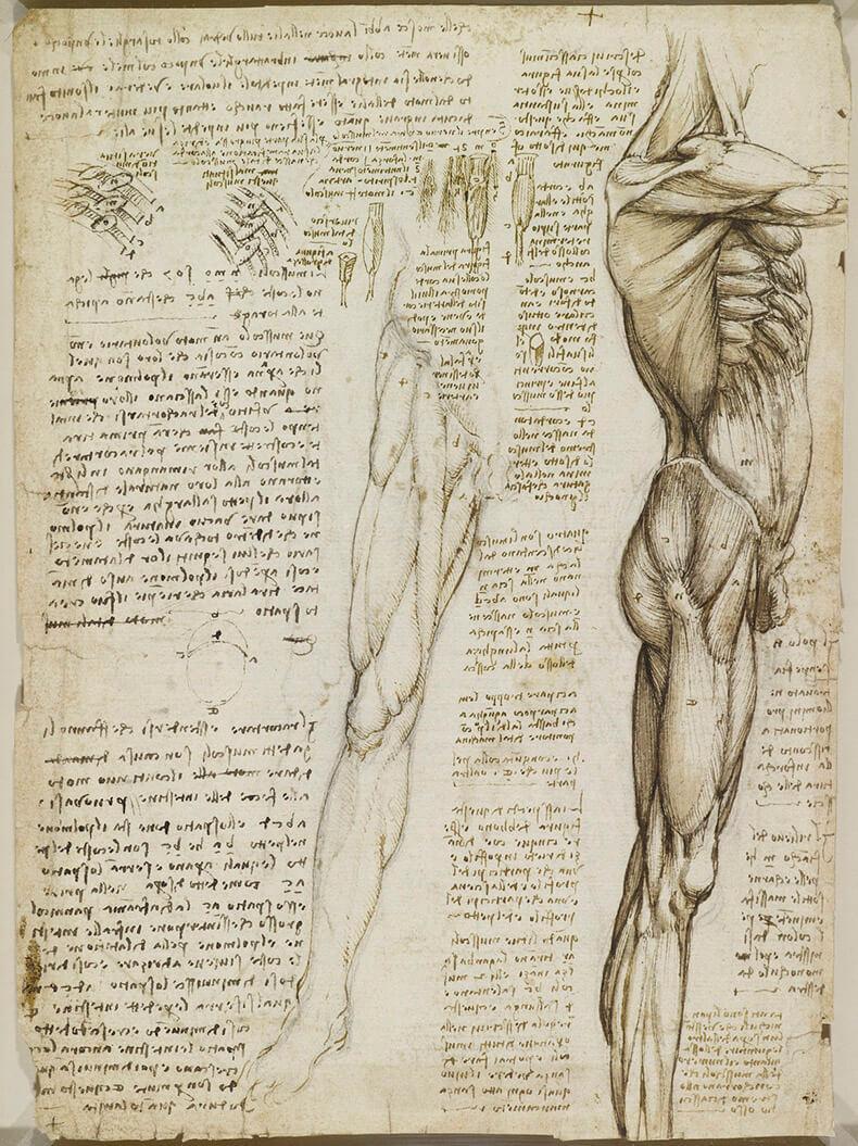Открытку, анатомические картинки леонардо да винчи